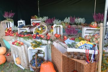 Święto Produktu Lokalnego stoisko Poniatowej na dole dynie jabłka śliwki, kwiaty wrzosu, białe skrzynki