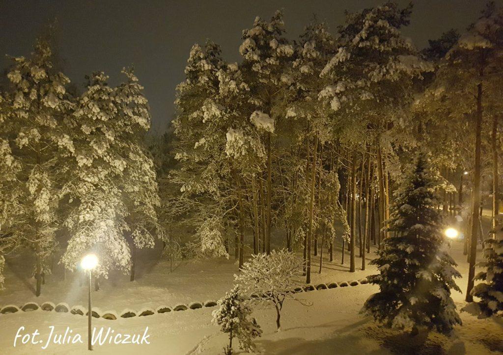 nocny widok na pokryty śniegiem las na pierwszym planie choinka oraz zapalone latarnie