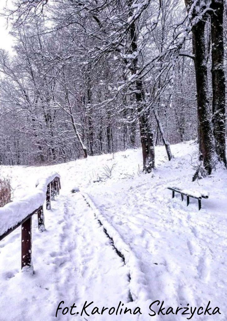 zima po prawej las i ławka w śniegu po lewej barierka drewniana