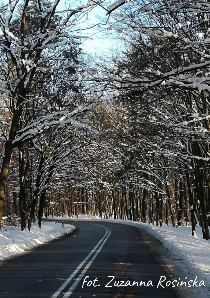 droga za cmentarzem w Poniatowej asfaltowa droga w lesie zimą, pobocze pokryte śniegiem nad droga gałęzie ze śniegiem
