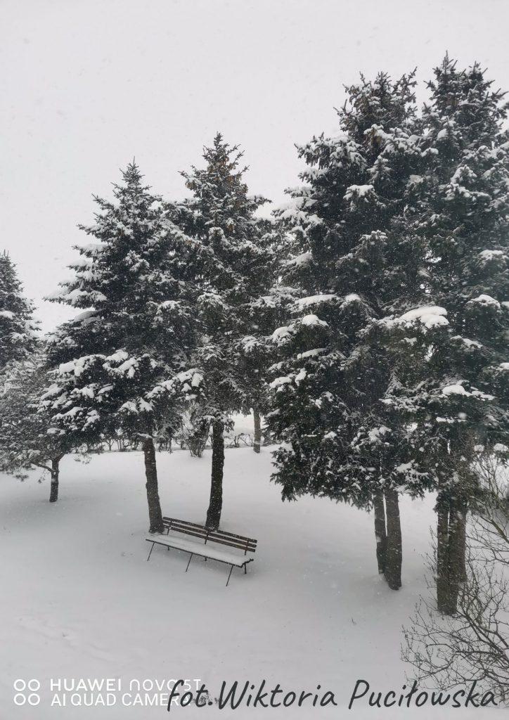 zima na środku ławka obok cztery świerki w śniegu