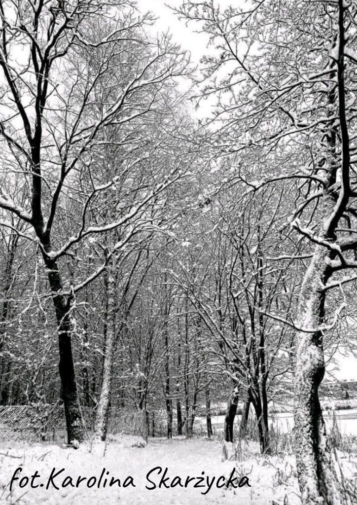 widok na las zimą drzewa pokryte śniegiem