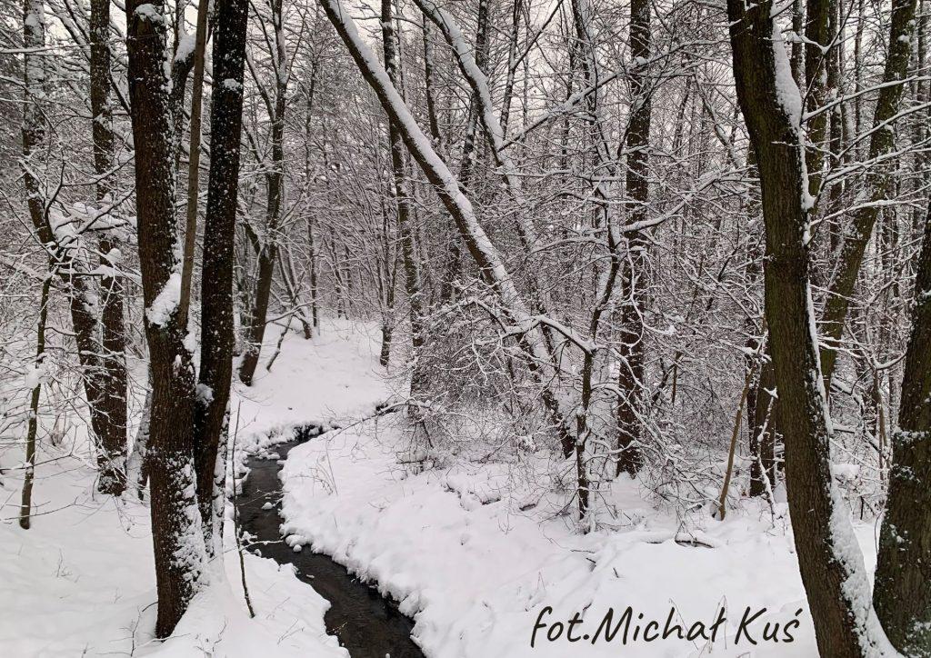 drzewa w lesie zimą na środku strumyk