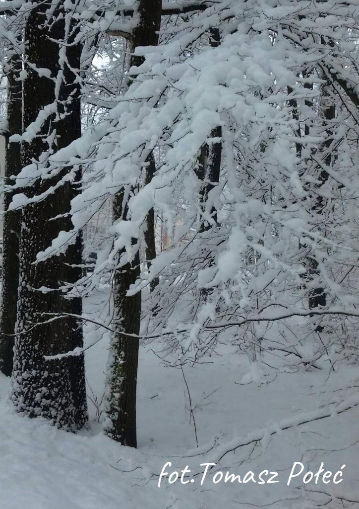 zima gałąź drzewa w śniegu